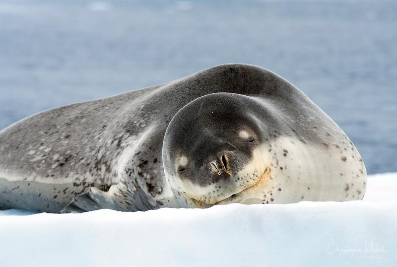 icebergs_pleneau_island_lemaire_20130106_7939.jpg