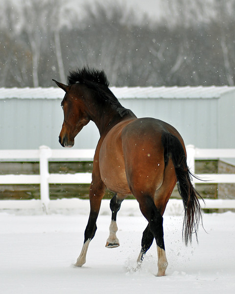 Snowy Dalanta 028 RETOUCHED.jpg
