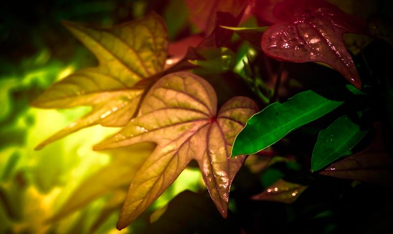 The Magic of Light-443.jpg