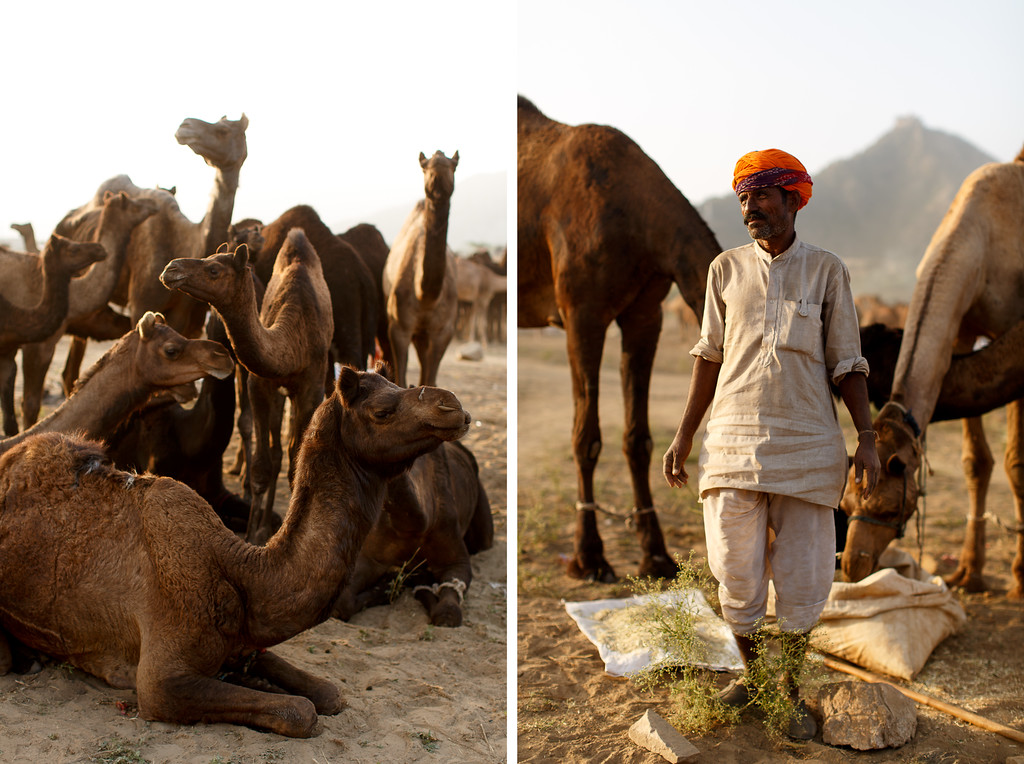 Photography Pushkar Camel Fair 2016