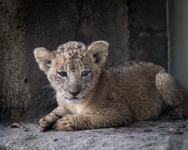 Dallas Zoo Oct. 7, 2020