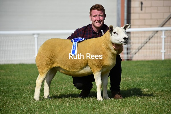 NSA ram sales Builth Wells August 2019