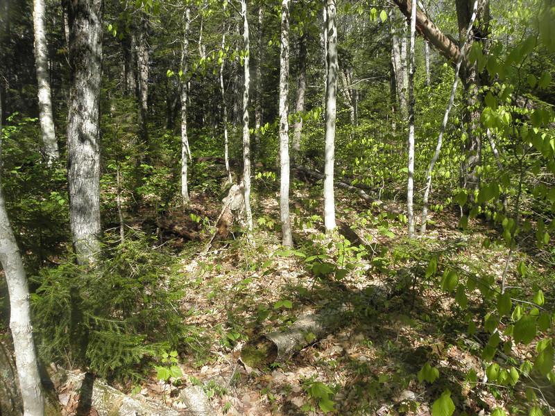 Woods down low.JPG