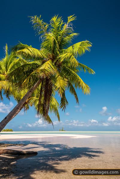 Coconut Isles