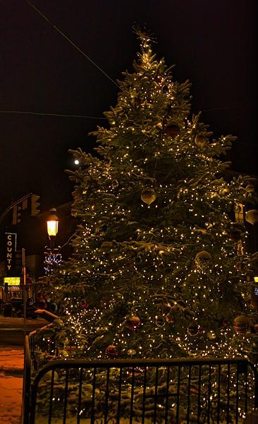 tree14 w county vert 1.jpg