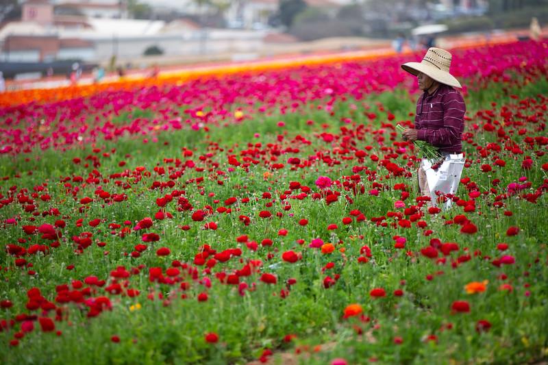 Spring Flowers B-334.jpg