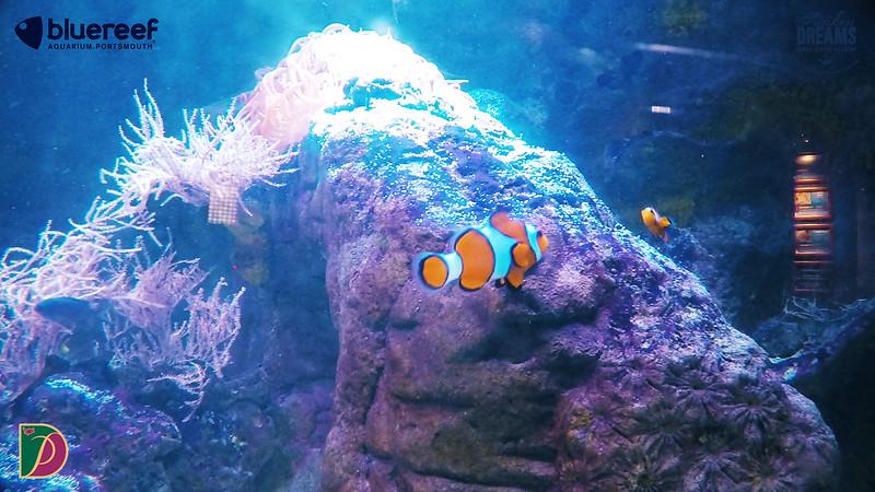 Blue Reef.00_13_04_40.Still015.jpg