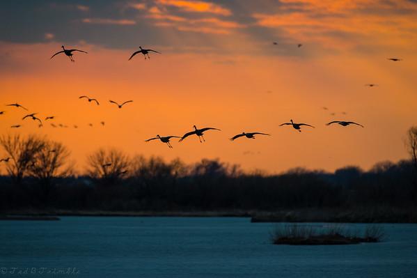 Crane Migraton
