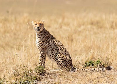Massai Mara Preserve, Kenya