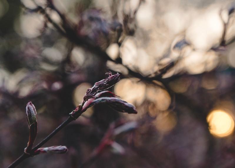 SpringBokeh-41.jpg