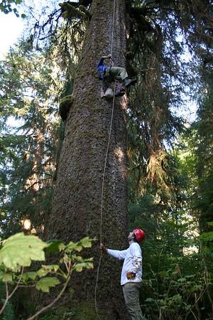 Murrelet Nest Searches/Veg Work