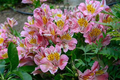 Dies' Flowers