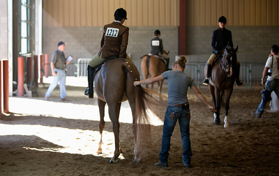 The Arabian Horse Show