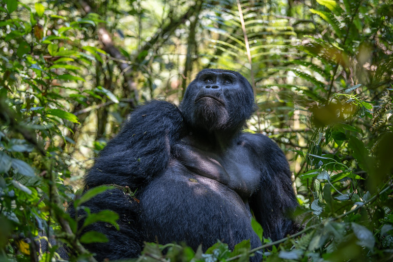 Uganda_T_Gor-535.jpg