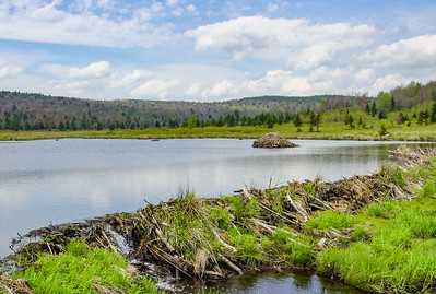 dolly sods, may 2003
