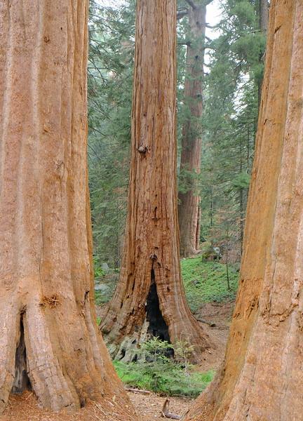 California Day 6 Sequoia 05-30-2017 141.JPG