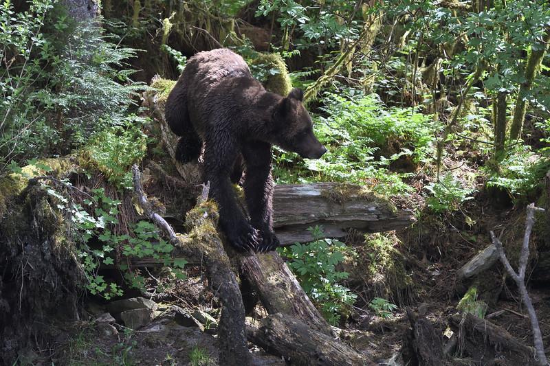 Walking the log