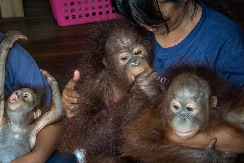 Borneo-2261.jpg