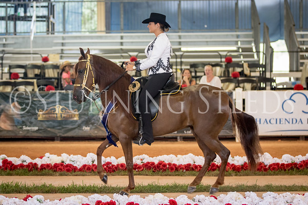 283-Fino Amateur Fillies 4 Years