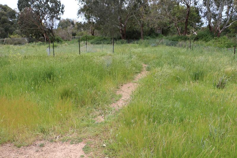 Werribee - Grassland Restoration