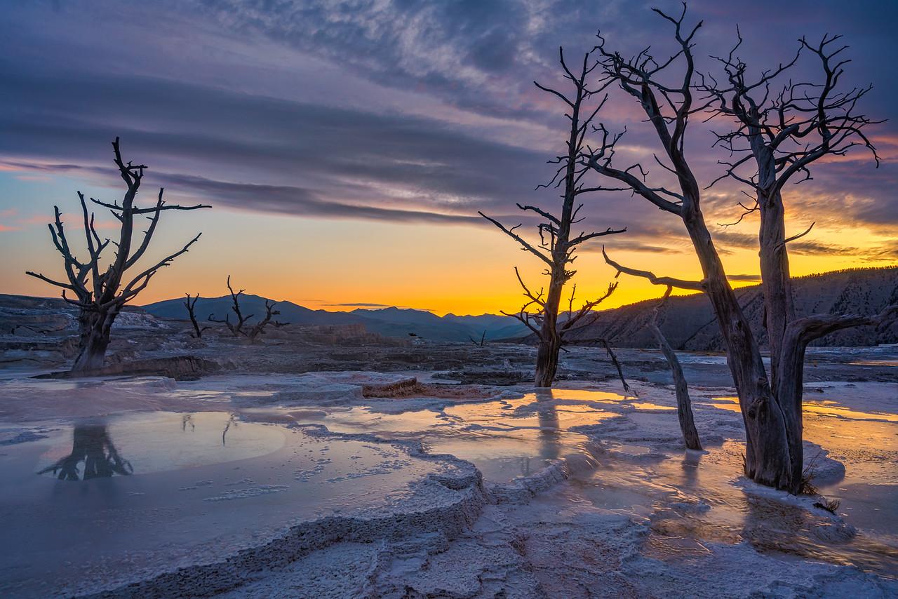Mammoth Hot Springs Yellowstone National Park Wyoming