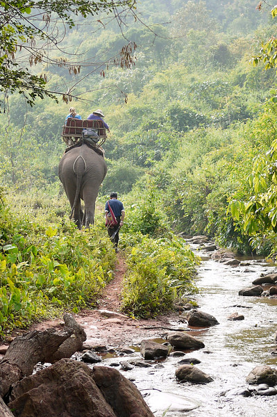 Jungles, rivers and rice paddies on a rural elephant trek in Laos.