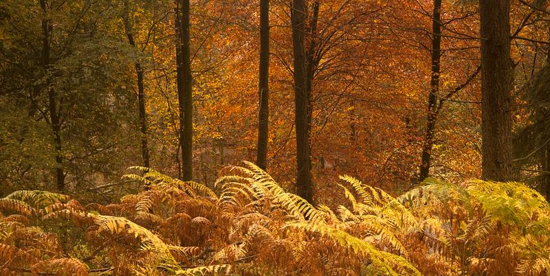 Elterwater woods 1.jpg