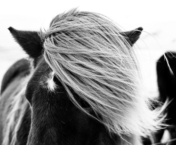Iceland Beautys-10.jpg