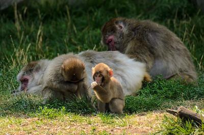 2012 Aug - Zoo