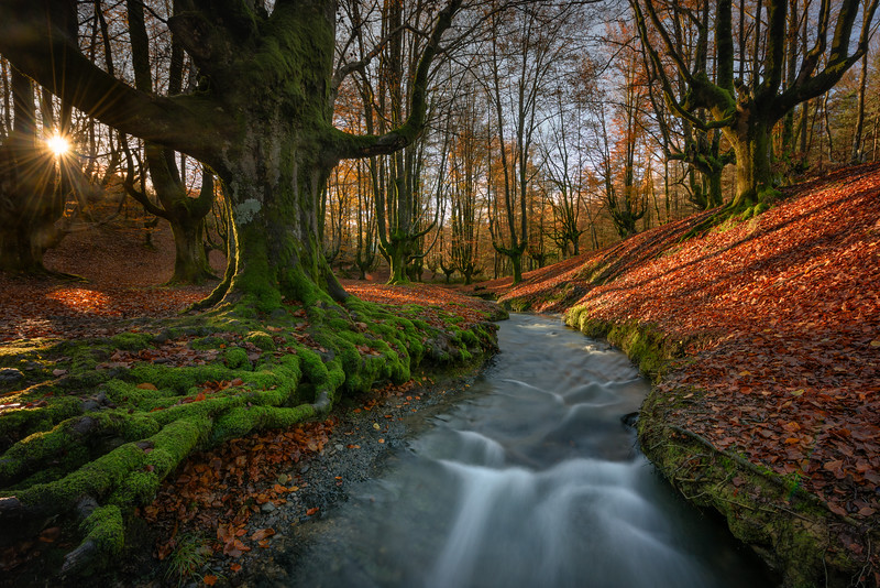 Otzarreta Forest, Vizcaya. Basque Country, Spain.