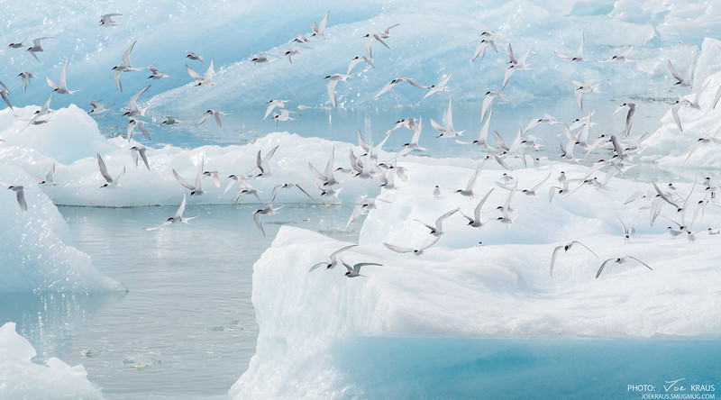 Flying in Ice
