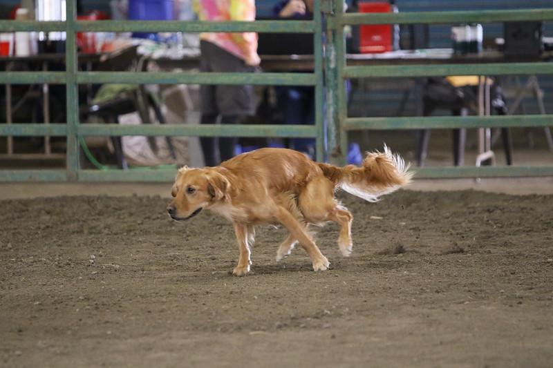 3-10-2019 Bloodhound-0755.jpg