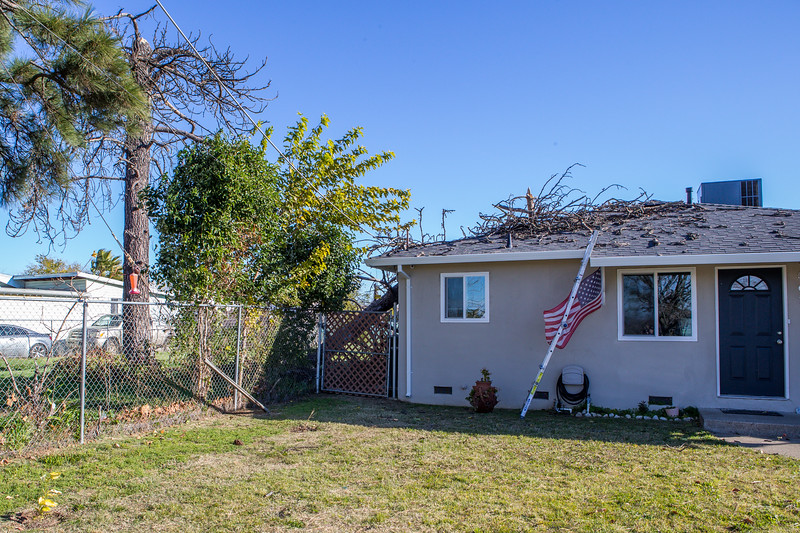 5671 Wallace Ave - Tree 1030am 12 16 2017 Extremly Windy Conditions-2.jpg