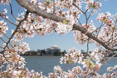 4-4-2009 Cherry Blossom picnic select