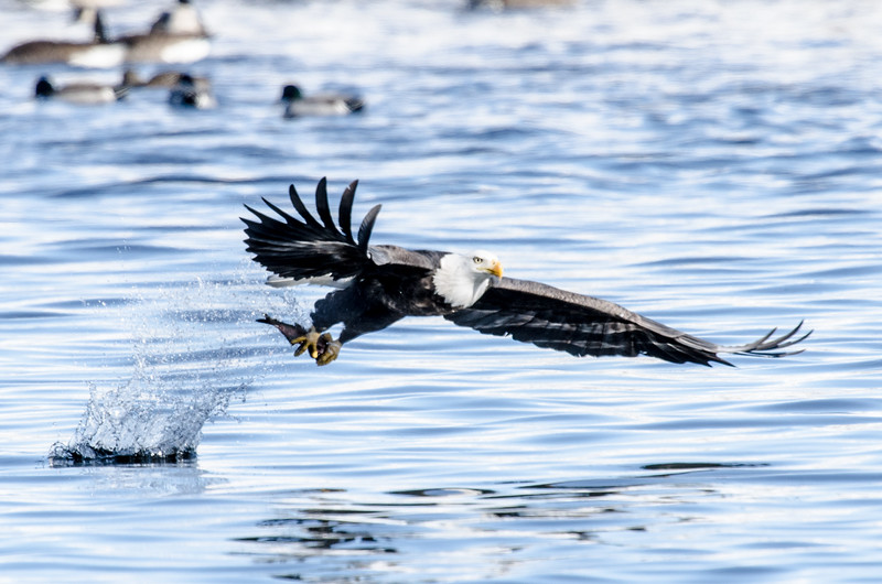 keats-eagles-winter2018-6.jpg