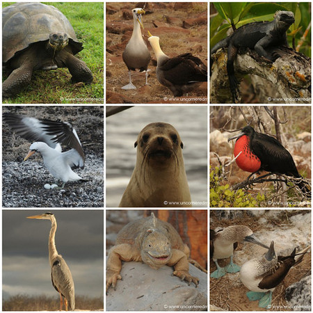 Galapagos Islands Mosaic