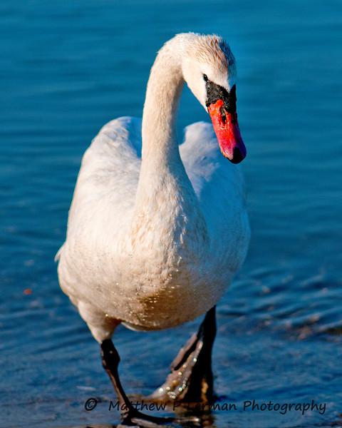 409 Swan MAT_6100.jpg