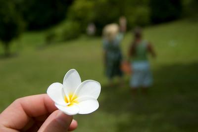 Maui, Hana, Flowers of Maui