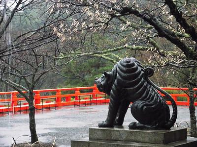 Время цветения сакуры. Весна 2012