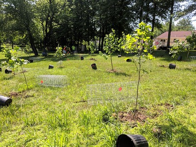 5.25.18 Tree Planting With RRD