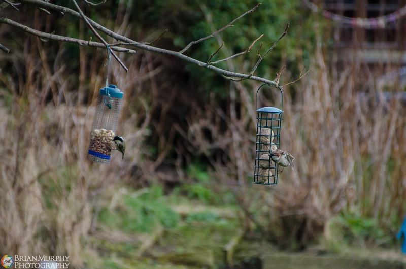 Birds 050218-12.jpg