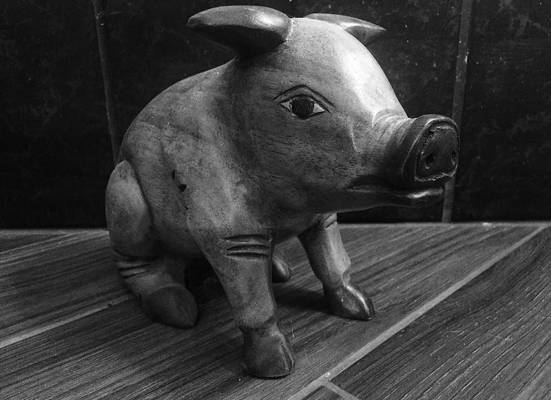 bw pig.jpg