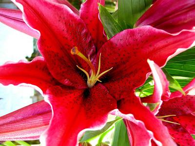Petals, A Flower Shop