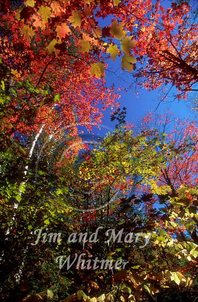 Trees_029