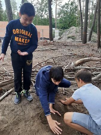 WO-les in het bos