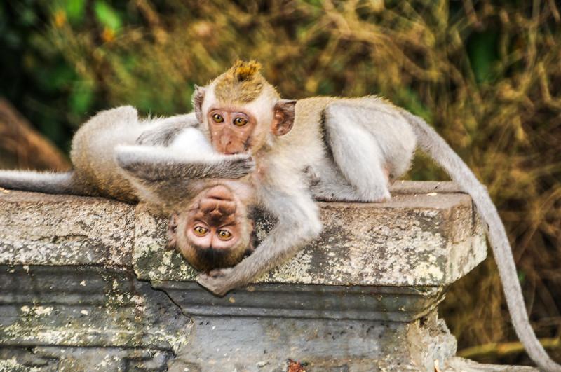 Bali Monkeys-7.jpg