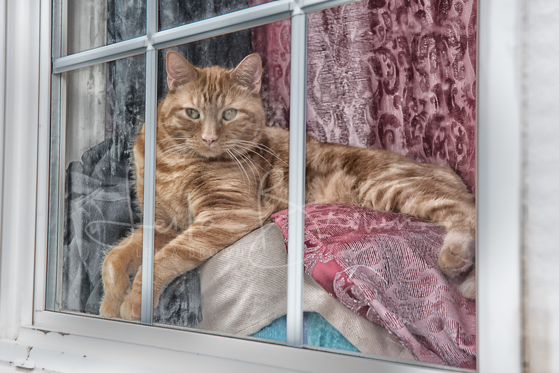 Jelly Bean Row cat.jpg