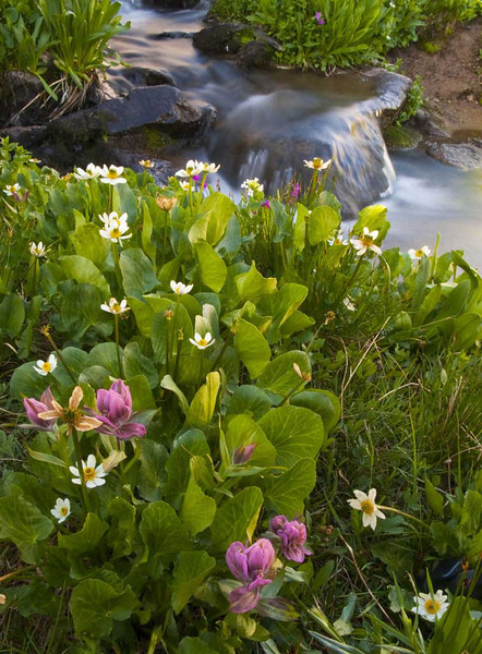 Colorado Wildflowers & High Basins