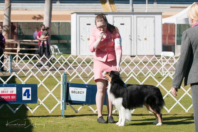 20170205_Australian Shepherds_Lost Dutchman Kennel Club-33.jpg