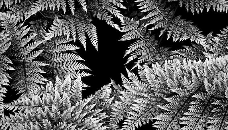 White Ferns 05.24.2020